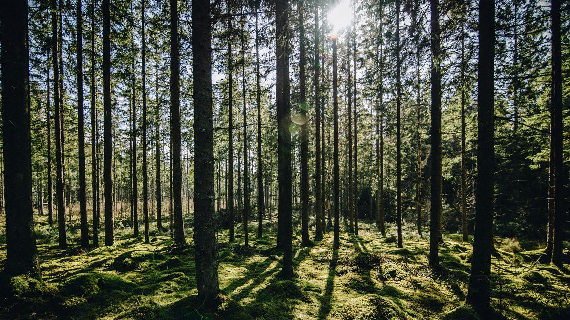 Riforestazione Vivieco