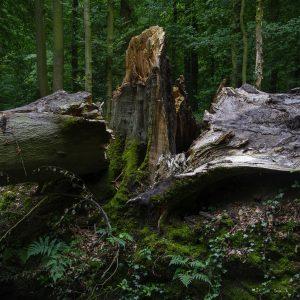 Foreste devastate dal maltempo: strage 14 mln di alberi