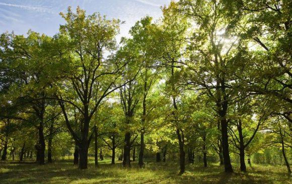 Intesa Sanpaolo per un mondo più green